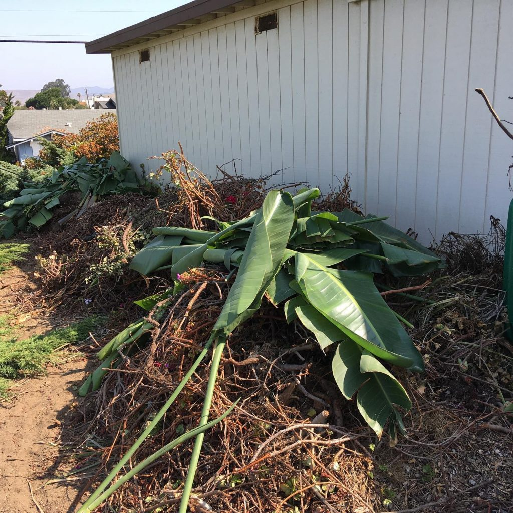 Yard Green Waste Removal Service in Santa Maria, CA